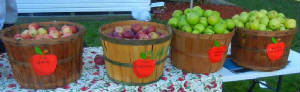 Lacey Twp Apple Festival 2014